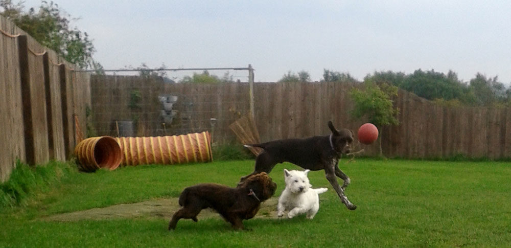 Dog Day Care Bishop Auckland
