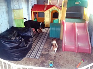 pampered pets doggy den