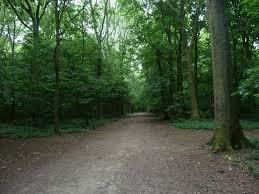 Stanmar park woodland dog walk.jpg