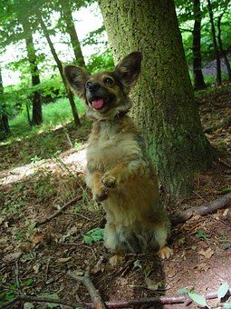 dog in woods.jpg