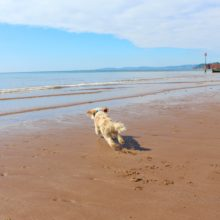 Dawlish Warren dog friendly beach.jpg