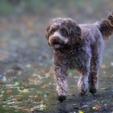 Pooch-Photography-Sample-001.jpg