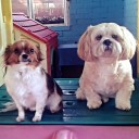 pampered pets doggy daycare