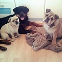 pampered pets home boarding