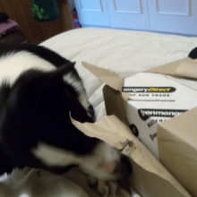 Opening Dog of the Month goody box
