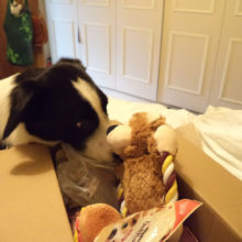 Whats in the Box for dog of the month?