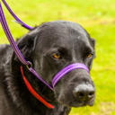 all-in-one-dog-training-head-collar-with-clip.jpg