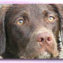 Pawfect Banner Image_webpage.png