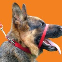 Red Canny Collar Orange Background_Low Res.jpg