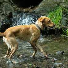 Pooch-Photography-Sample-008.jpg
