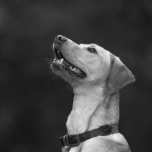 Pooch-Photography-Sample-009.jpg