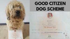 good citizen dog scheme