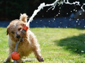 tips to keep dogs cool