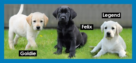 Sponsor a puppy | guide dogs for the blind association posts.
