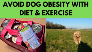 avoid dog obesity