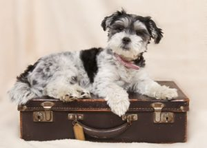 holidays for dogs