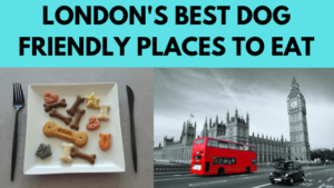 dog friendly london