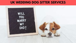 uk wedding dog sitter services
