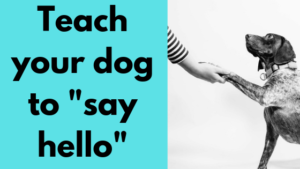 teach your dog say hello